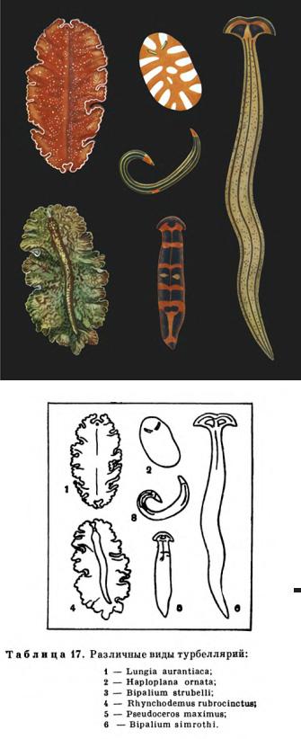 глазные паразиты у человека симптомы