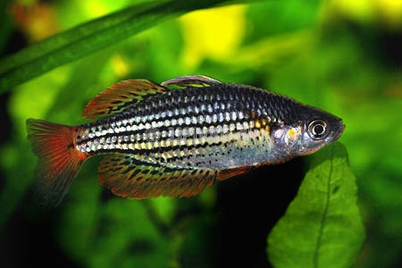 нерест рыбы фото