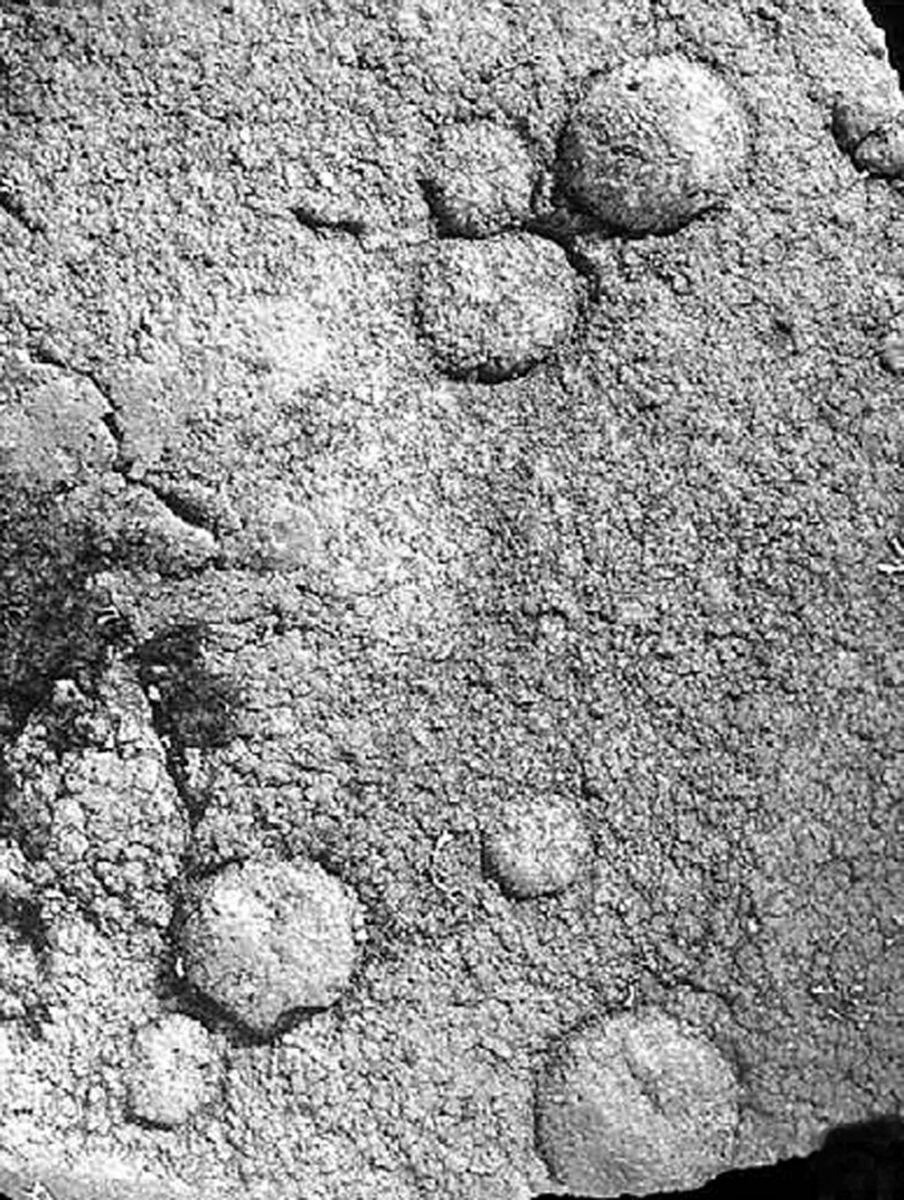 Отпечатки и следы возрастом 1,8 млрд лет. Их приписывают многоклеточным, но их запросто могли оставить одноклеточные