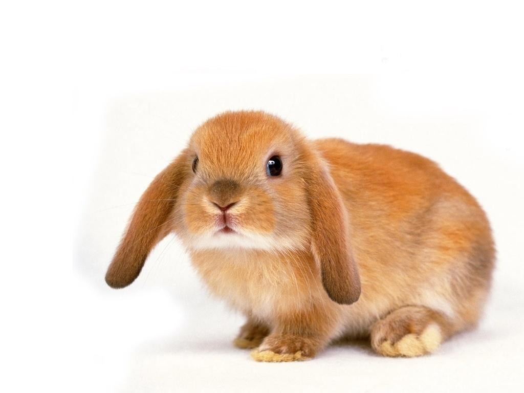 Особенности содержания кроликов в квартирах