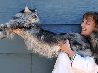Кот Стьюи на руках у хозяйки. Фото с сайта vaterland.li