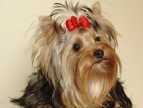 корм для собак с аллергией на коже