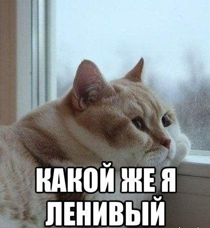 http://www.ekzotika.com/ekzotika_img/newsfoto/1406725000.jpg