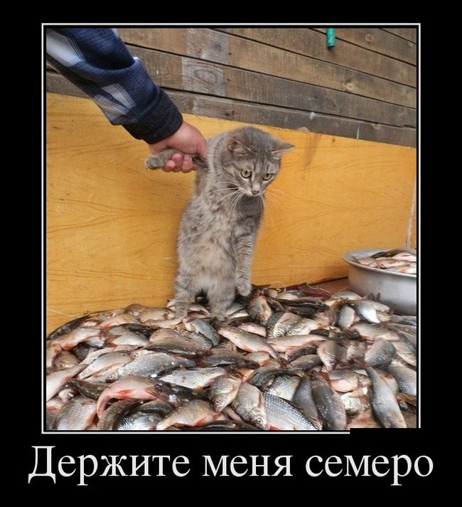 все про рыб фото