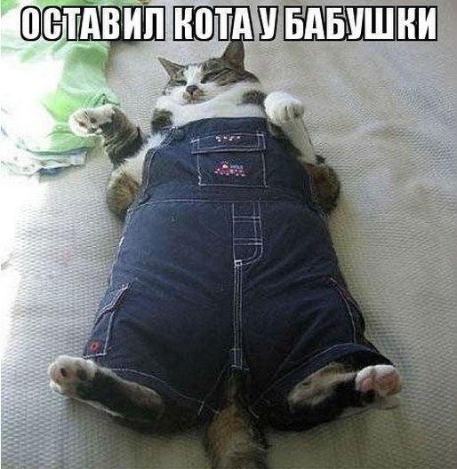 http://www.ekzotika.com/ekzotika_img/newsfoto/1406737558.jpg