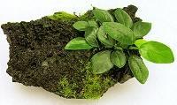Выращивание растений на камнях и корягах