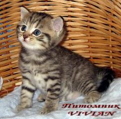 тигровый котенок фото