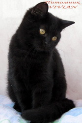 фото котята чёрные