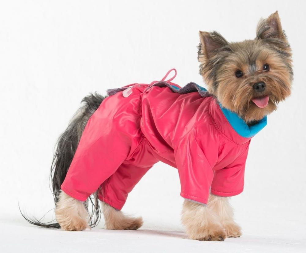 Собаки и их одежда картинки