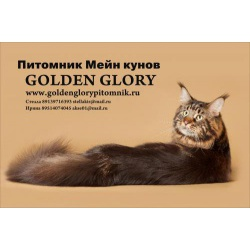 Мейн куны из питомника Golden Glory