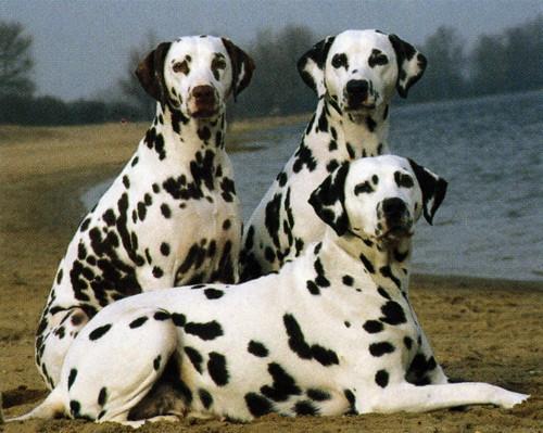 Собака на белом фоне фото