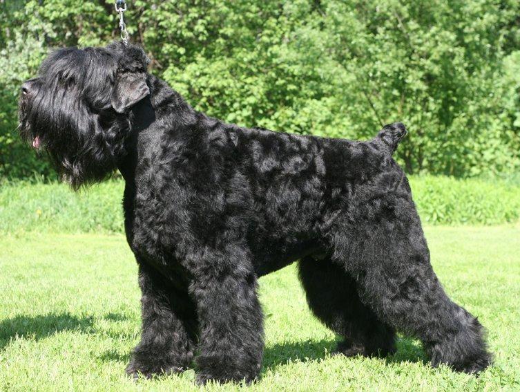 собака сталина порода