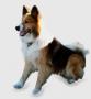 Исландская собака (Исландская Сторожевая, Исландский шпиц)