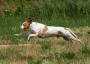 Сен-жерменский бракк