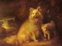 Батакский шпиц (померанская собака, батакская собака Суматры)